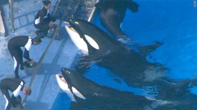 Orca that killed trainer returns to SeaWorld show - CNN com