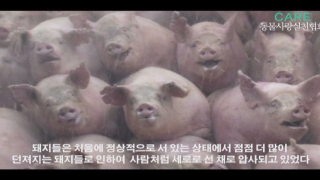 Foot and mouth disease spooks south koreans cnn foot and mouth disease spooks south koreans publicscrutiny Gallery