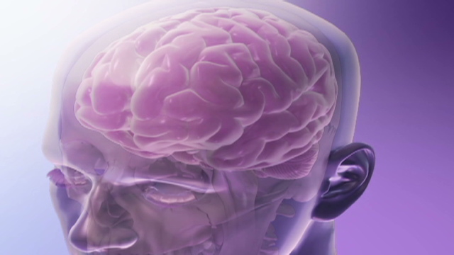 Herbal medicine for brain development picture 1