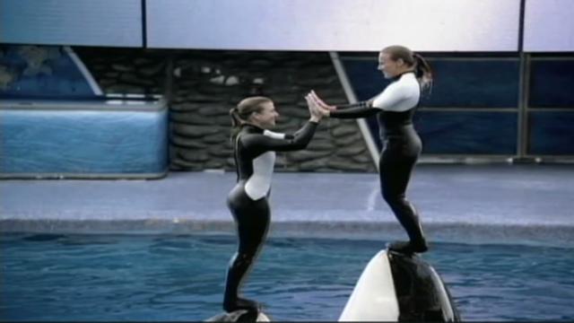 SeaWorld trainer killed by killer whale - CNN com