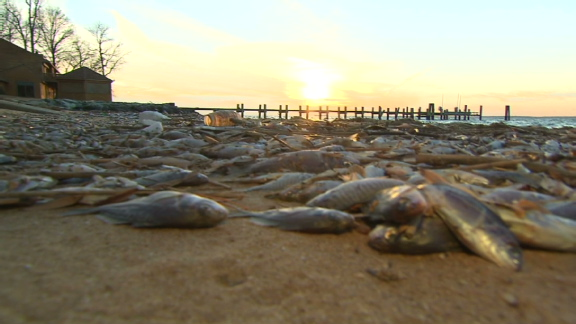 2 million fish found dead in maryland for Fishing in md