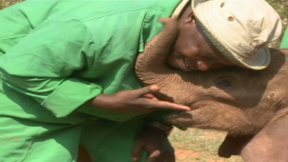 kenya animals elephants. Kenya#39;s orphaned elephants