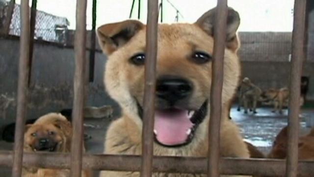 Cat Rescue Dog Dotch Eats