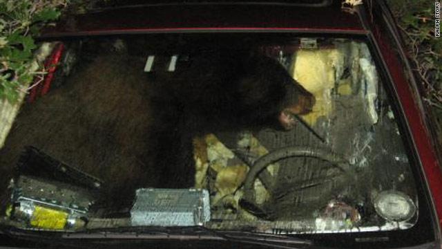 Bear Gets Stuck In Car Goes On Brief Ride Cnn Com