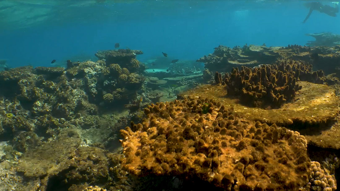 Great Barrier Reef Headed For Massive Death Cnn Com