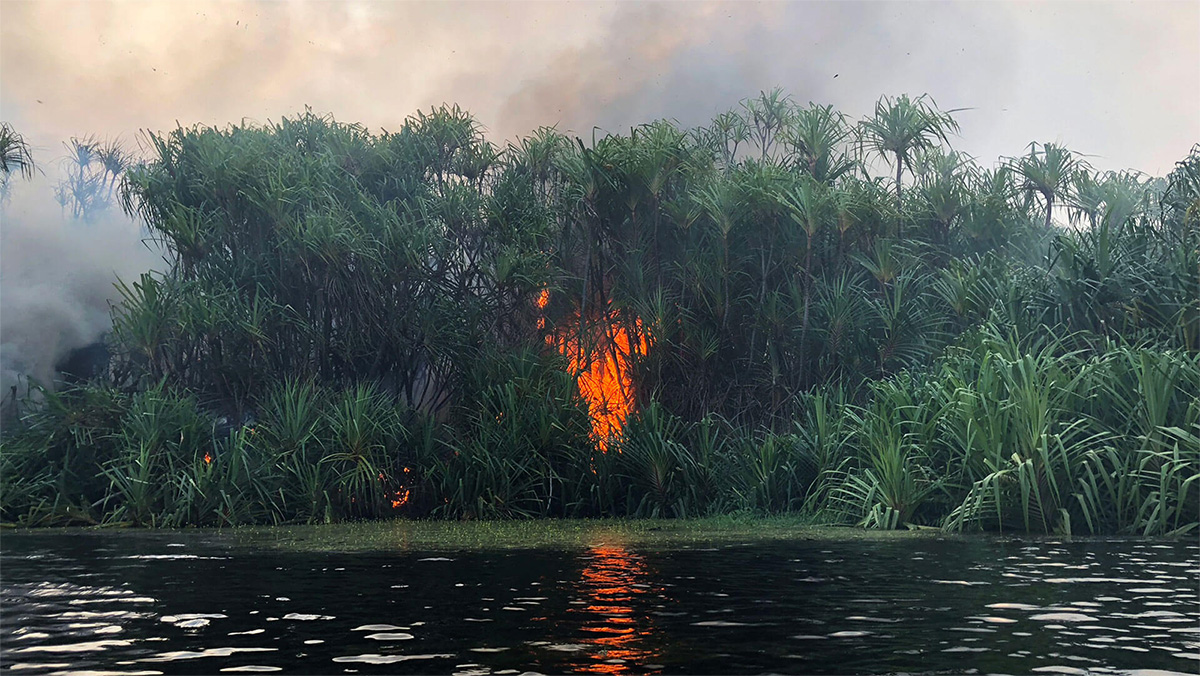 The world's demand for palm oil is igniting a climate bomb